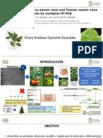 Deteccion Virus Tabaco y Tomate