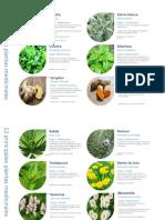 Plantas Medicinales Mas Usadas