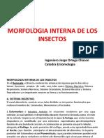 Morfologia Interna de Los Insectos