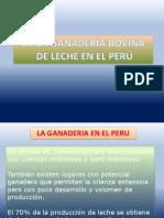 Ganaderia Lechera Perù.clase 03