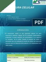 RUPTURA_CELULAR.pptx