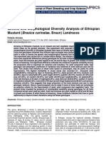 Genetic and Morphological Diversity Analysis of Ethiopian Mustard (Brasica carinataa. Braun) Landraces