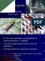 10 Filo Arthropoda.ppt