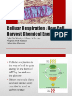 7. Cellular Respiration