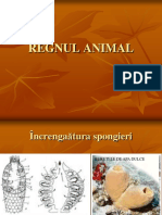 12.Regnul Animal Ppt Cls a 9 A