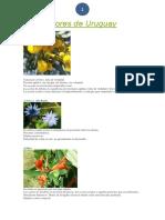 Flores de Uruguay