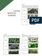 Tipos de Plantas Según Su Tamaño