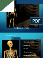 Clase 8 Anatomia 2019