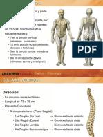 AnatomiaHumana Columna