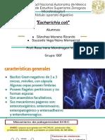 e. coli (1)