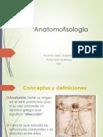 anatomofisiologia