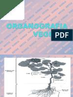 ORGANOGRAFIA 2013