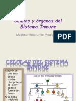 Células y Órgano Del Sistema Inmune