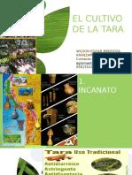 Potencial del cultivo de tara en Moquegua