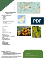 Presentación-SISTEMA-VERDE.pptx