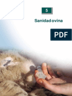 Enfermedades Parasitarias Sanidad Ovino Chile 1 Convertido