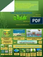 Biodiversidad.las Algas Marinas. Mapa Mental.