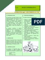 articles-66070_Ficha_zapatos_de_seguridad.pdf