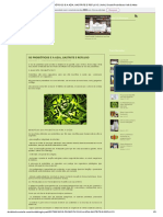 Os Probióticos e a Azia, Gastrite e Refluxo _ Kefir _ Druidd Probióticos Kefir & Afins