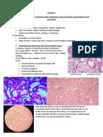 Pathology Slides 1