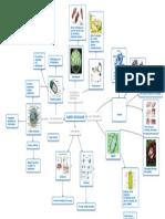 Clases de Celulas - Mapa Conceptual