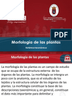Morfología de plantas.ppt