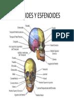 ETMOIDES Y ESFENOIDES
