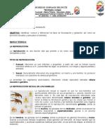 Taller biologia octavo.docx
