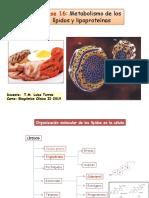 Clase 16 Metabolismo de Los Lipidos y Lipoproteinas