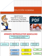 AP.reproductor Masculino 1
