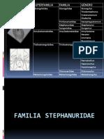 Familia Stephanuridae