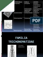 Familia Trichonematidae