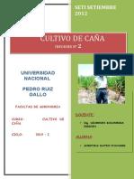 173550469-reforestacion-9