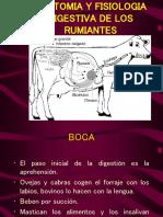 Anatomia y Fisiologia Digestiva de Los Rumiantes