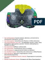 Neuroanatomía práctica.pptx