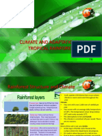Climate and Adaptation in Tropical Rainforest