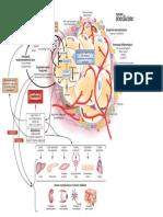 Fat-Organ-Disease.pdf