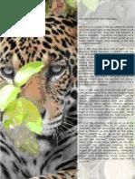 Hunting a Jaguar in the Pantanal