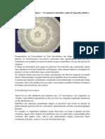 O fungo amazônico que degrada plástico