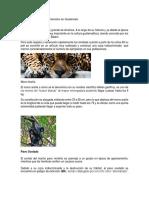 Animales en Peligro de Extensión en Guatemala