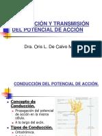 vdocuments.site_conduccion-y-transmision-del-potencial-de-accion-dra-oris-l-de-calvo-msc (2).ppt