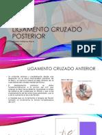 Ligamento Cruzado Posterior (1)