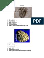 Trilobite Edson