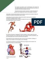 Músculos Voluntarios e Involuntarios