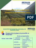 Exposición Plagas Granadilla Oxapampa.ppt