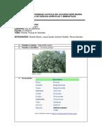 Toxicologia Plantas toxicas
