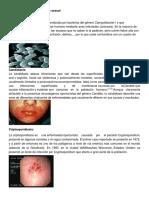 17 enfermedades de transmicion sexual.docx