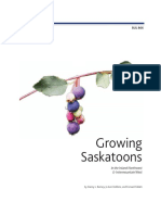 afin canadian.pdf