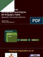 fonacion.pptx