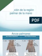 Irrigación de la región palmar
